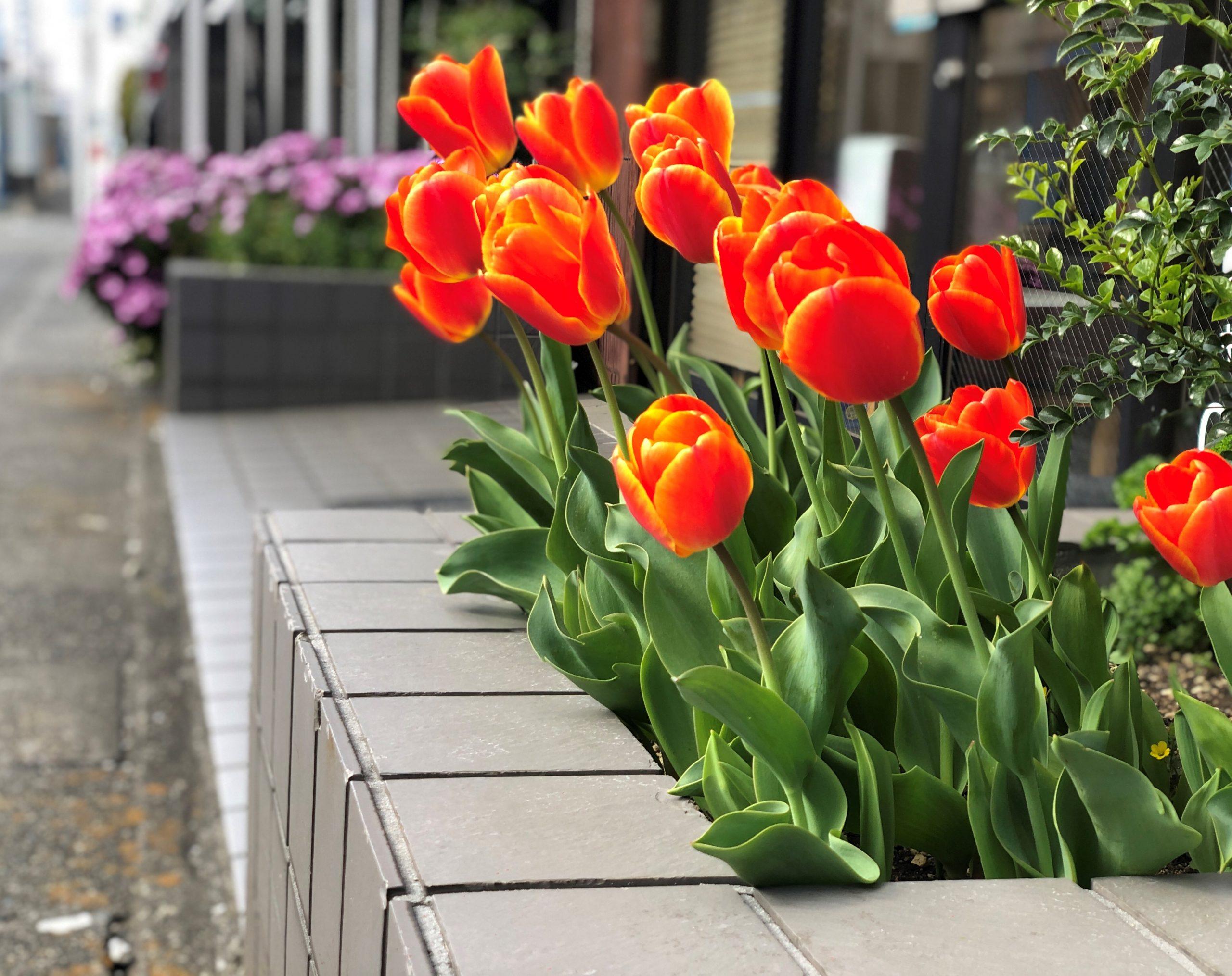 春になると花は咲く